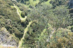 PSR Sicilia sottomisura 4.4: aiuti a favore del territorio e della biodiversità siciliana