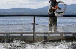 Operatori nell'acquacoltura sostenibile